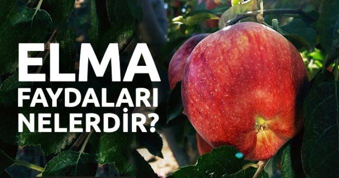 Elmanın-Faydaları-Nelerdir